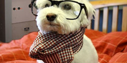 Hipster dog has artisanal AM station