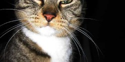 """On behalf of the FCC, the """"no-means-no"""" cat says no Internet streams on FM translators."""