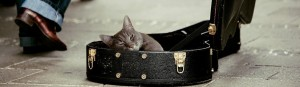 Cat in violin case.